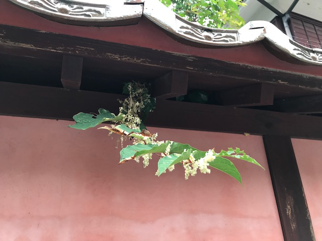■岡山県高梁市、べんがらの里・吹屋も秋が深まっています。