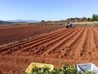 ■長崎県雲仙市はジャガイモの産地。9月中旬は植え付けの季節です。ここで、10月31日と11月1日にフォーラムです。