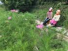 ◆奈良県十津川村谷瀬、「ゆっくり散歩道」に手作り案山子が増えています。コスモスがもう咲き始めました。