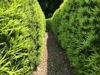 """■雲仙市国見町神代小路の生垣。武家屋敷の並ぶエリア、双方の家の生垣がこんな""""細道""""を作ります。"""