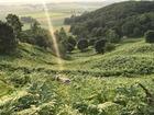 ■北海道池田町「まきばの家展望台」。広大な草原で羊たちが遊びます。