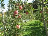 りんご農園.jpg