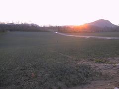 鳥取らっきょう畑と夕日