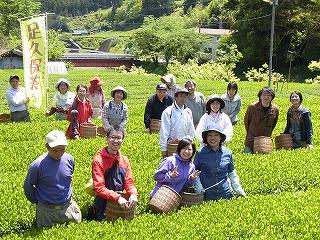 お茶摘み手伝いツアー