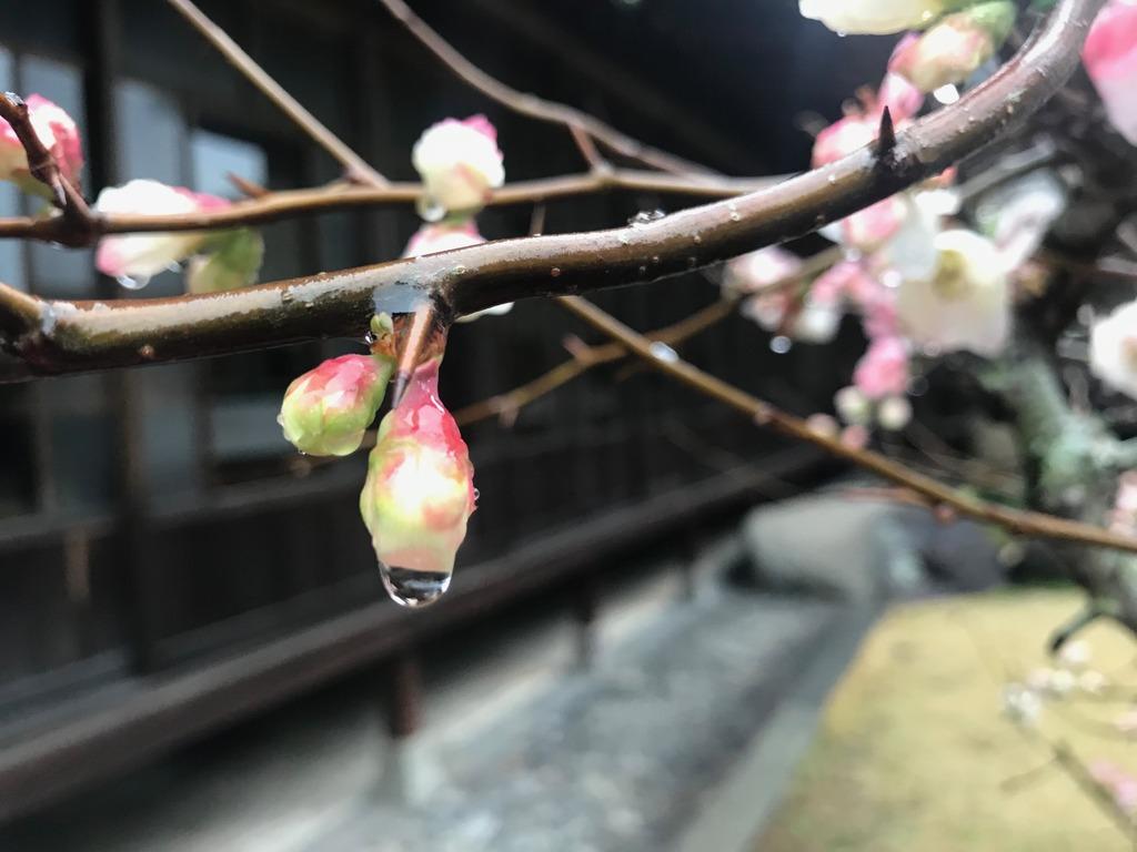 雲仙市国見町鍋島邸の春