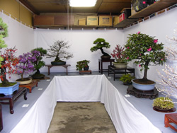 空き店舗盆栽展示